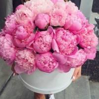 29 ярко-розовых пионов в коробке R754