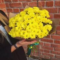 Букет 11 веток желтой хризантемы в крафте R669